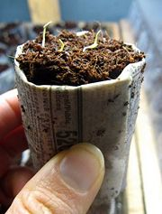 Newspaper seeding pots