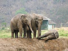 31811 testing success elephants